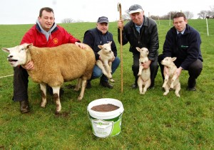 ImmuBoost Ewe and Lamb Testimonial_Donegal_Feb 2012
