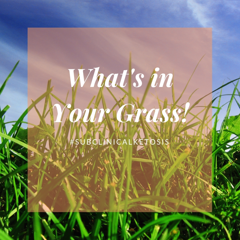 What's in Your Grass